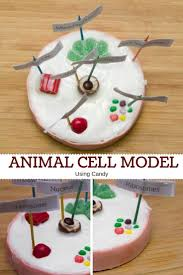 animal cell project candy.  Project Easy And Fun Animal Cell Model Using Candy Great Idea For A Science Project  My Little Me On Project Candy L