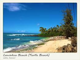 Laniakea Beach Reviews Haleiwa North Shore Hawaii