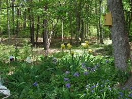 Small Picture 53 best Woodland Garden images on Pinterest Gardening