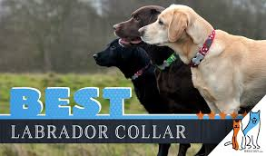 Blueberry Pet Collar Size Chart 8 Best Dog Collars For Labradors In 2019