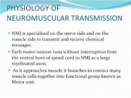 anatomy physiology of neuromuscular junction monitoring physiology