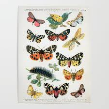 Butterfly Chart Vintage Poster By Vintageartstore