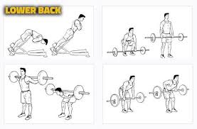 30 Inquisitive Lower Back Workout Chart
