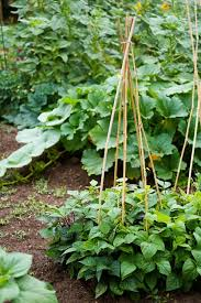 Small Picture Small Vegetable Garden Ideas Tips Garden Design