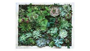vertical succulent garden work