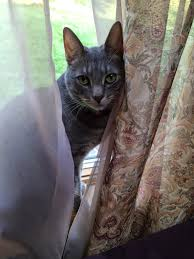 Life Really is Too Short - So Sew: The Cotton Cupboard Quilt Shop & My Grandcat Adamdwight.com