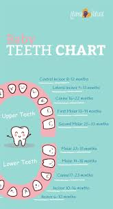 When Do Babies Get Teeth Chart Baby Teething Chart What Order Do They Come In Baby