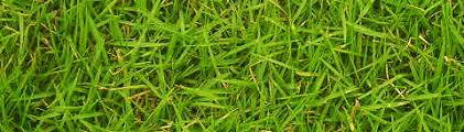 ארומטי ירוק - קבוצת בשמים