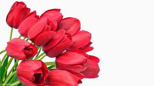 Wallpaper Bunga Mawar Merah 34 Image Collections Of
