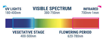 Cannabis Cultivation The Light Spectrum And Ways To Raise