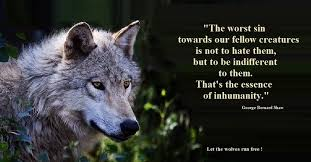 Animal Rights Quotes Mesmerizing Quotes Animal Force