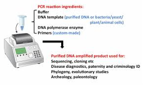 The Awesome Pcr My Rambling Thoughts