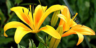 Image result for flower images