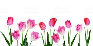 Image result for flowers border