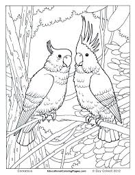 Small Picture 59 Free jungle bird coloring pages for adults Cockatoo coloring