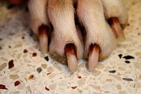 dog nail bed infection dog beds gallery images and wallpapers