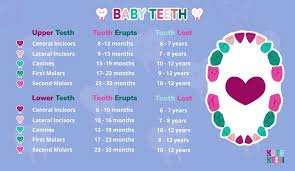 Teething Chart Babies Baby Teeth Order Infant Teething Chart Kute Keiki