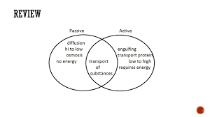 Active Vs Passive Transport Venn Diagram Thinking Log 17 What Are The Two Types Of Passive Transport Ppt