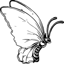Butterfly Coloring Page 09