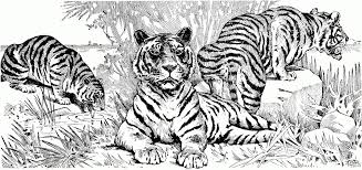 Small Picture Free Tiger Coloring Pages 2017 Coloring Free Tiger Coloring Pages