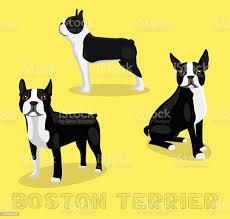 Dog Boston Terrier Cartoon Vector ...