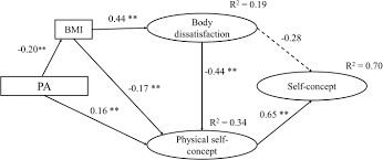 Frontiers Effect Of Physical Activity On Self Concept