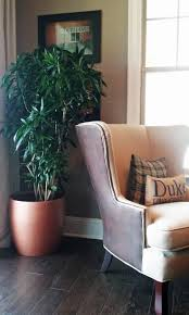 indoor home office plants royalty. For Professional Office Plant Care In Charlotte NC Area. Phone Experts Interior Landscape Plants, Holiday Decor And Indoor Plants Home Royalty P