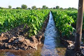 Watering Of Agricultural Crops Countryside Natural Watering