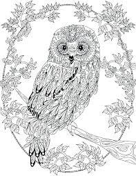 Coloring Pages Owls Predragterziccom