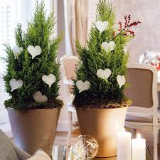 creative indoor plants decors for