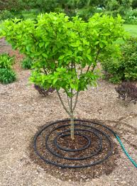 Image result for Photo watering the root of the tree
