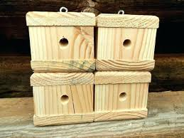 plans carpenter bee house trap plans strong comfortable photo from how get exterminator beach