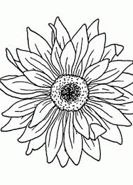 Small Picture Sunflower coloring pages coloring pages of sunflowers printables