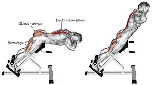 5 best lower back exercises workout