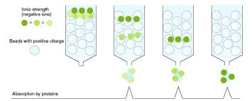 The Principle And Method Of Chromatography Mbl Life Sience