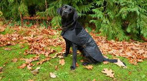 measure your dog for a dog coat