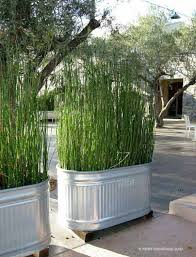 16 huge buckets with tall grass