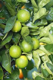 Free Fruit Trees From Tree People  SORO NCFruit Trees That Grow In Nc