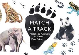 Match A Track Match 25 Animals To Their Paw Prints Magma