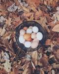 elke dag eieren eten