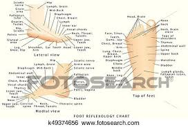 Top Of Foot Reflex Chart Reflexology Chart Clip Art K49374656 Fotosearch
