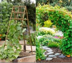 you can add the garden trellis to add more function and charm of your garden you can use the trellis as the supports if you want to grow fruiting vines or