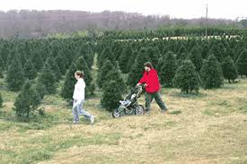 Find a South Carolina Christmas Tree Farm