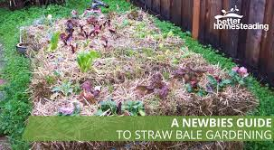 straw and hay bales for gardening instructions to get started