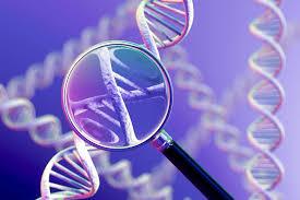 Image result for العلاج الجيني