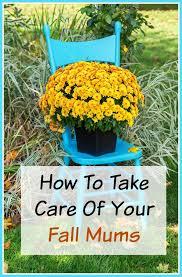 161 Best Fall Gardening Images On Pinterest  Veggie Gardens Fall Gardening