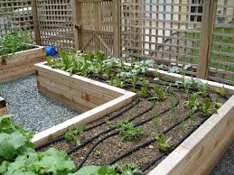 Small Picture Raised Vegetable Garden Design Plans Home design and Decorating