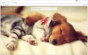 dogs and cats wallpaper. Perfect Wallpaper Cats U0026 Dogs Wallpaper HD Cat Vs Dog Themes And W