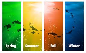 Hawaii Fishing Seasons Chart Maui Fishing Seasons Best Season To Fish In Maui Hawaii