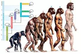 Evolution Of Man Chart In The Famous Evolution Of Man Image How Many Generations
